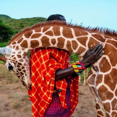 Girafe et massai 1