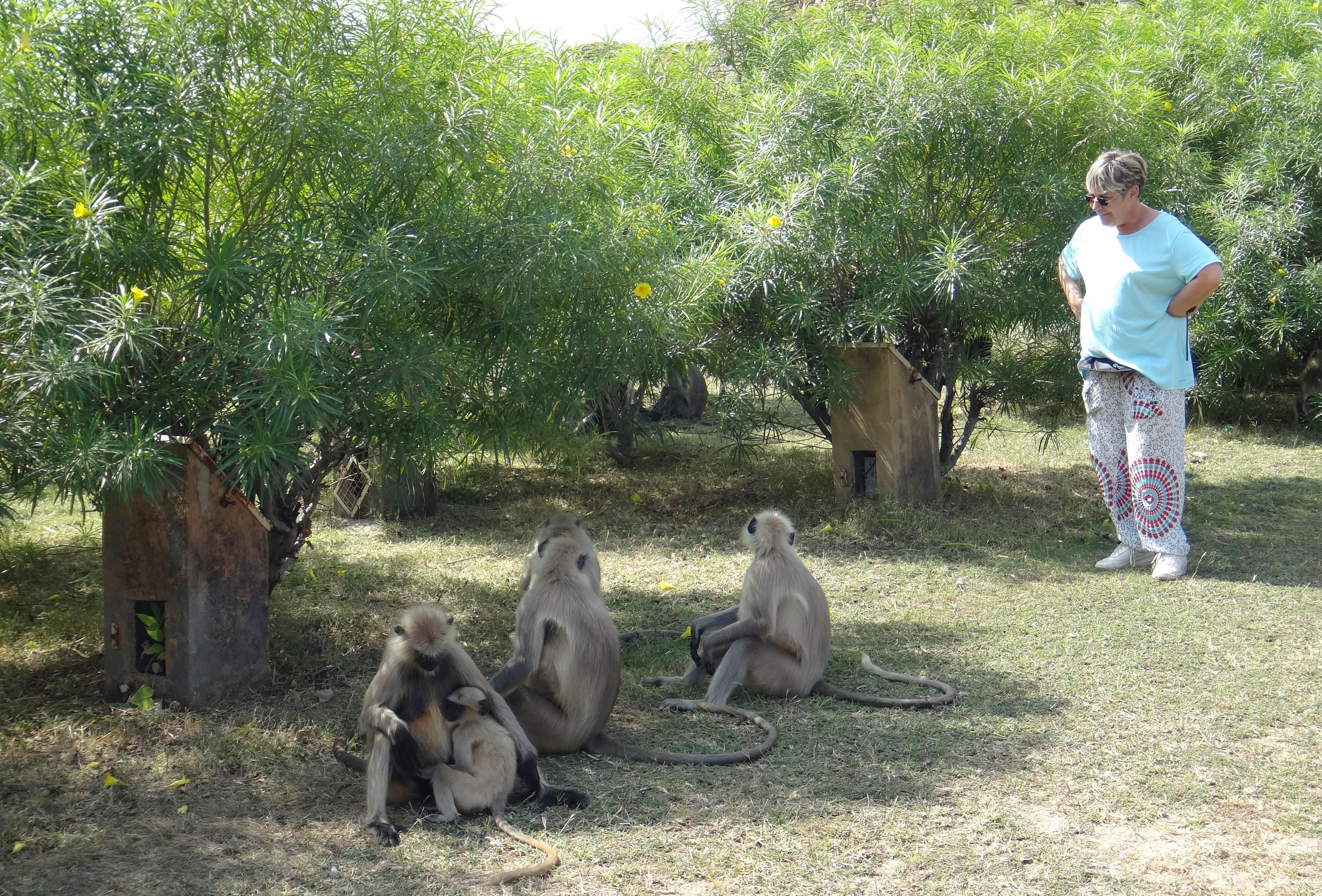 Michele et un groupe de singes en inde