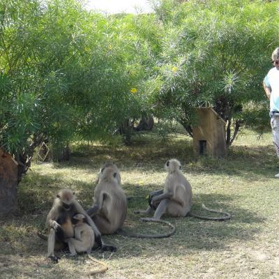Michèle et un groupe de singes en Inde