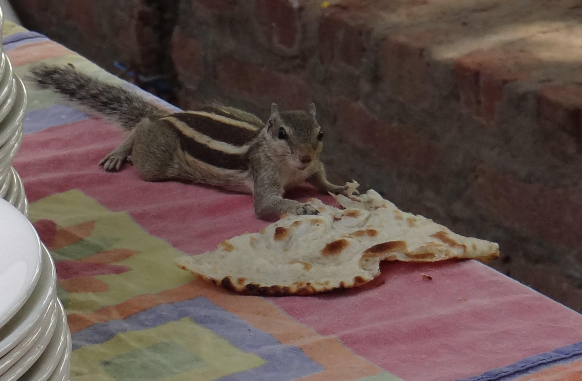 Petit invité à notre table en Inde (2017)