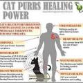 Purring therapy