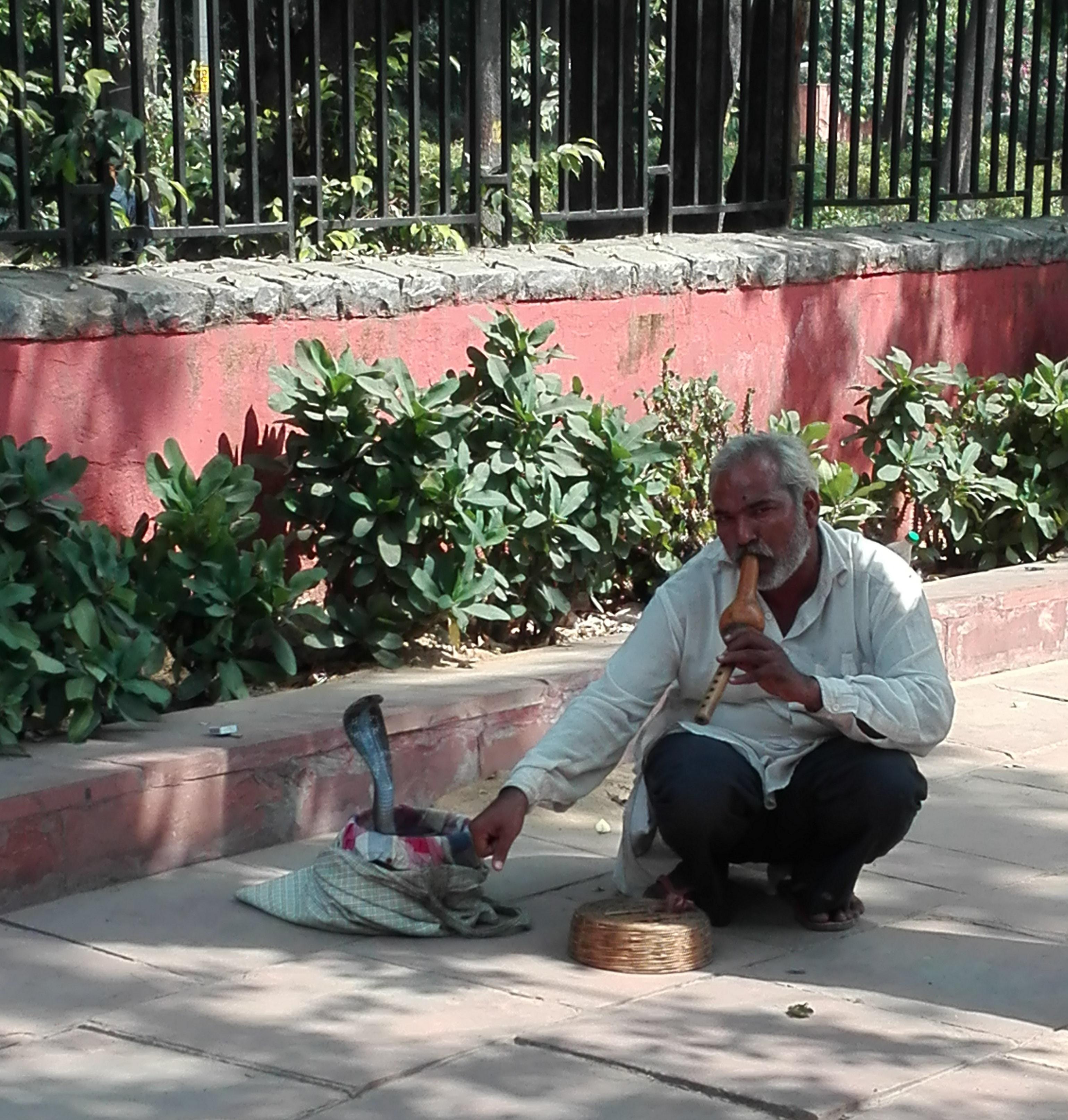 Rencontre avec un charmeur de serpents à Delhi (Inde)