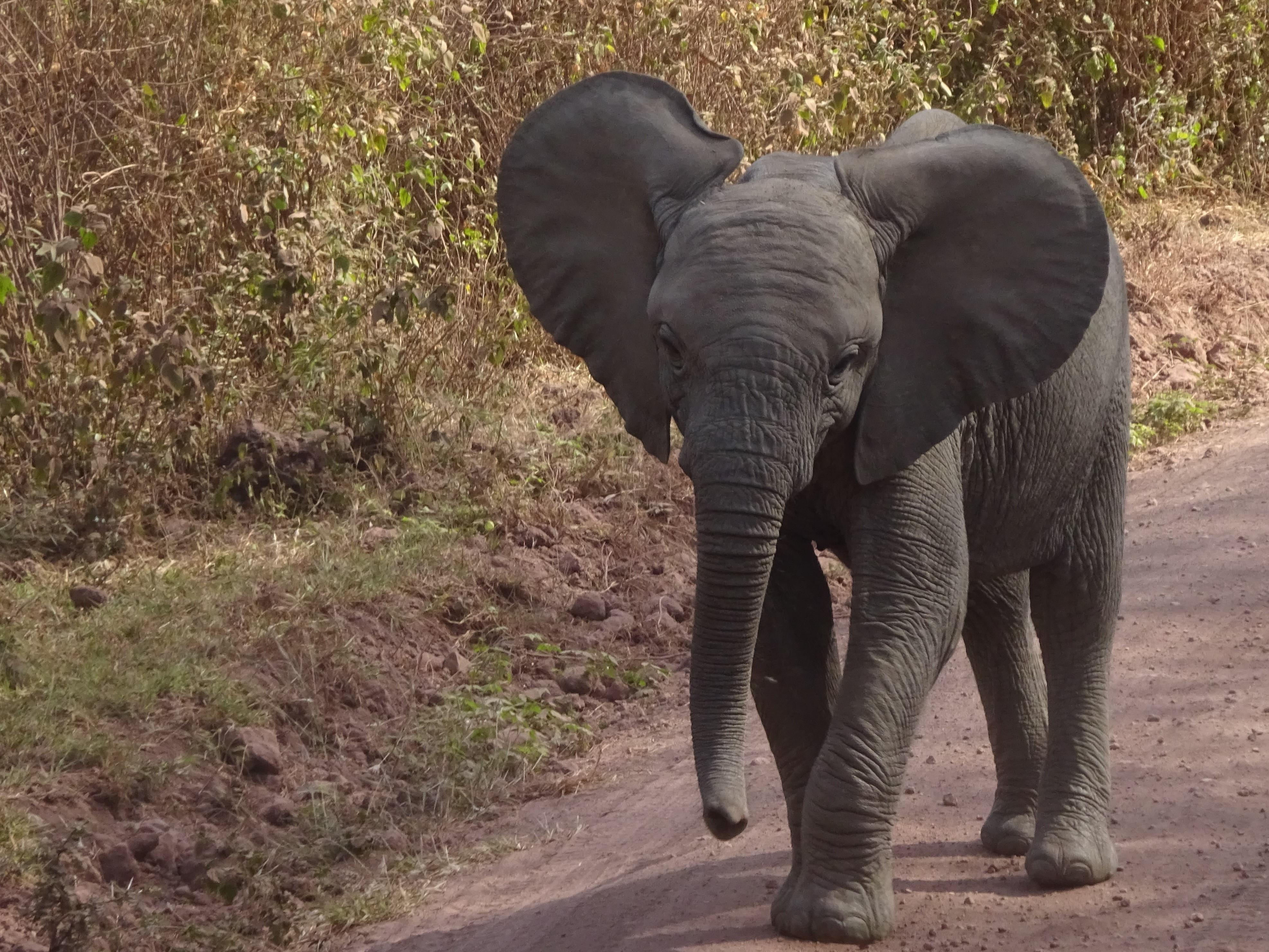 Rencontre avec un elephant tanzanie